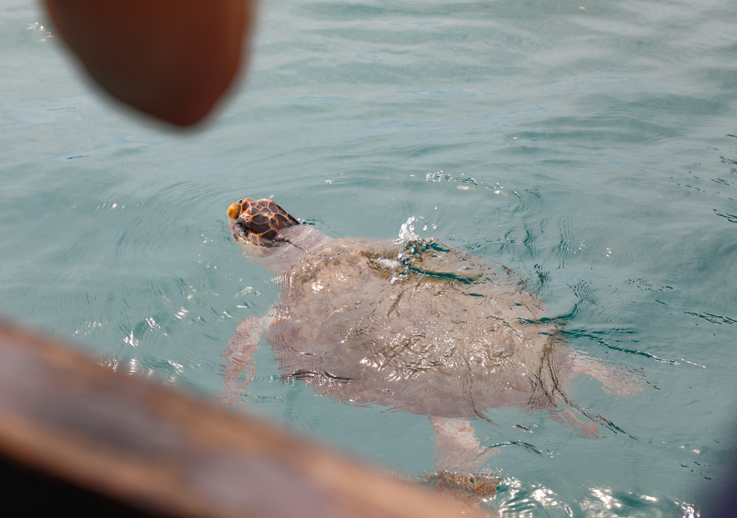 De schildpadden